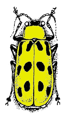 Spotted Beetle insect control
